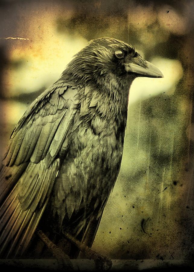 vintage-crow-gothicolors-images